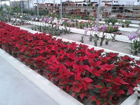 Foto 5 de Iberplanta - Empreendimentos Paisagisticos e Floricola, Lda