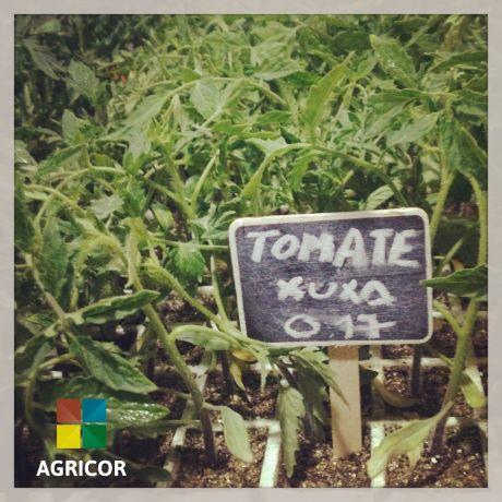 Foto 2 de Agricor - Produtos e Equip. para Agro - Pecuari, Lda
