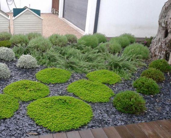 Foto 4 de Projeto de Raiz - Jardins