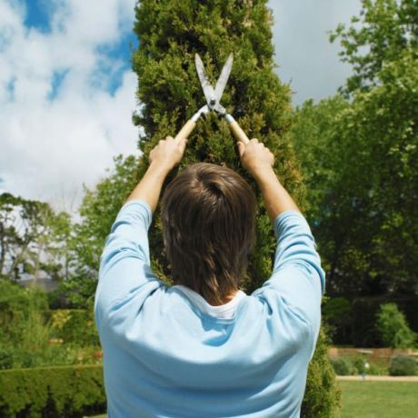 Foto 4 de Agrirelva - Arborizações e Jardins