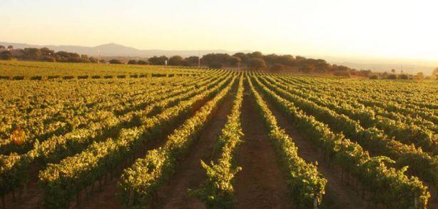 Foto 2 de Sociedade Agrícola Monte Seis Reis - Vinhos, Lda