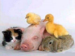 Foto 2 de Espiga de Arroz - Aparas de Papel Para Animais