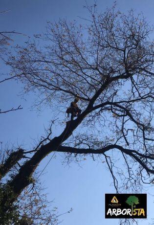 Foto 2 de Arborista - AltDoor Soluções Verticais LDA
