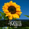 Logo Girassóis da Maia